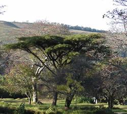 lodgetrees
